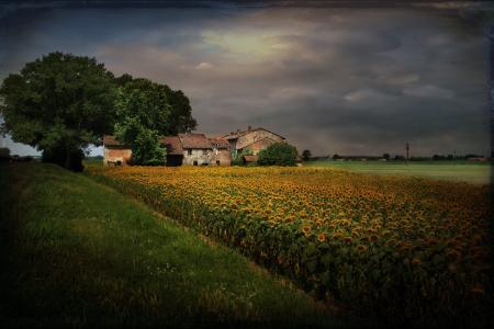 景观,风格,向日葵,房屋