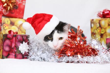 新年,猫,猫,小猫,礼品,盒子,帽子,金属丝