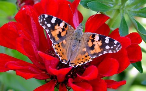 蝴蝶,花,叶子,自然之美