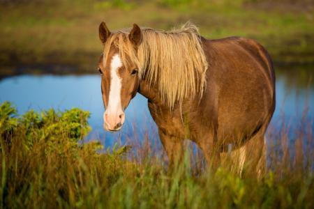 马,马,枪口,草地,牧场