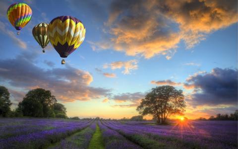 气球,性质,场,鲜花,日落