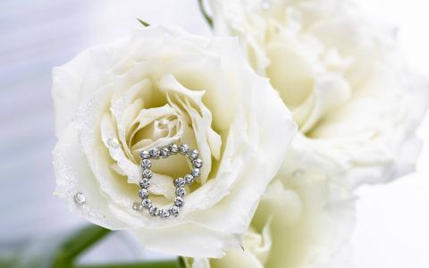玫瑰,白色,心脏
