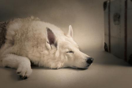 地板上睡觉的狗狗