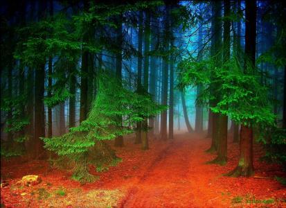 森林,树木,路,雾,性质