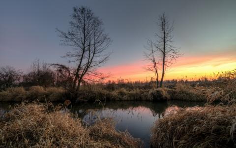 黎明,早晨,树木,芦苇,湖泊