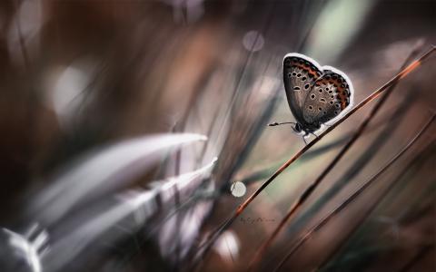 宏,蝴蝶,昆虫,茎,模糊的背景
