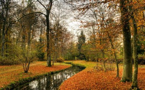 自然,秋季,公园,景观