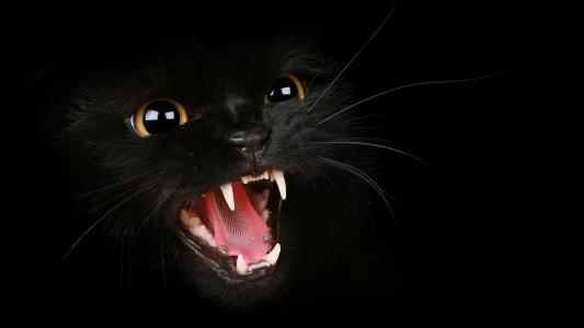 黑色,猫,壁纸