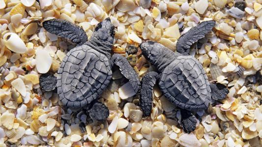 海龟,孩子们