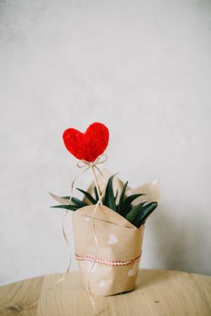 浪漫情人节盆栽礼物