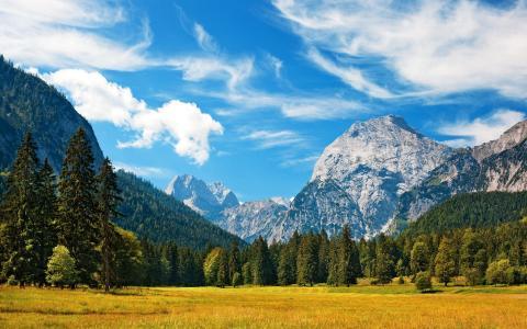 景观,山,森林,性质