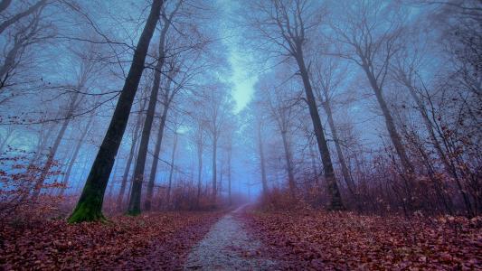 性质,森林,树木,道路,叶子,秋季
