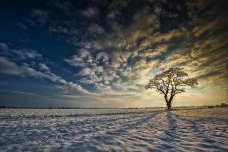 约克郡,英格兰,约克郡,英格兰,雪,树,日出,云,冬天