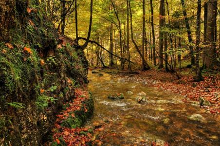 森林,河流,秋季,景观