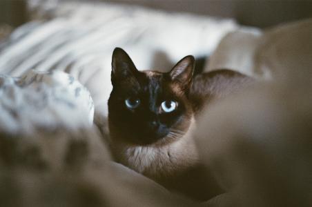 蜷缩着的小猫咪