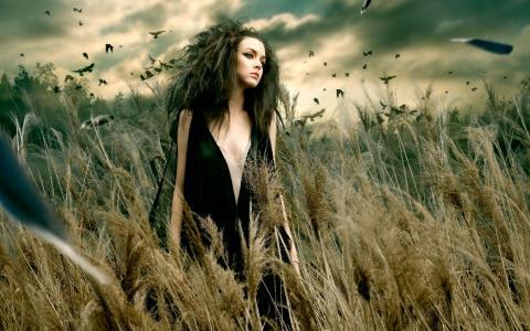 恶劣的天气,乌鸦,鸟,动荡,干燥,莎草,手段,沼泽,年轻,少女,女巫,上,一切,一百