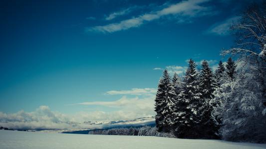 山,森林,雪