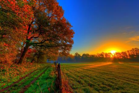 性质,秋季,路,森林,多彩,路径,叶子,树,秋天