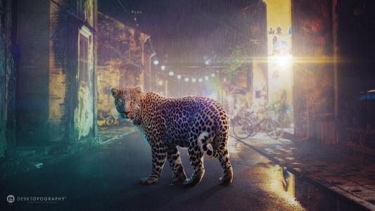 豹,野猫,城市,夜晚的城市,街道,路,雨