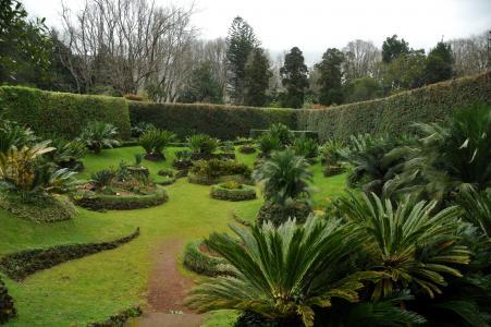 花园,葡萄牙,亚速尔群岛,棕榈园