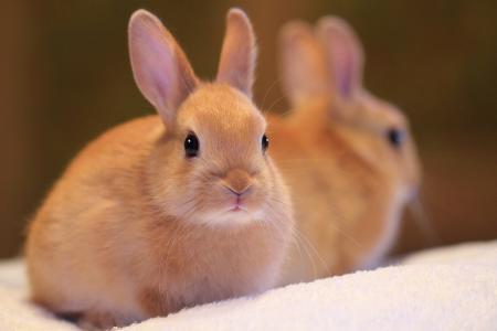 自然,兔子