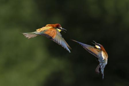 照片,散景,飞行,鸟类