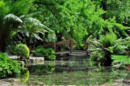 河,桥,植被