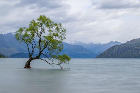 瓦纳卡湖孤独的树