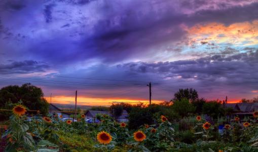 景观,向日葵,天空,云,性质