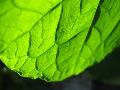 叶,浓绿,美丽