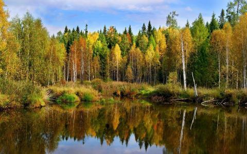 景观,秋季,森林,池塘