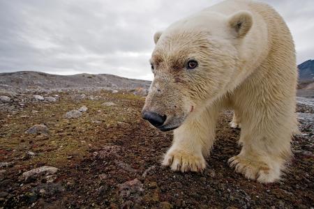 北方,自然,熊