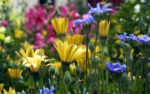 鲜花,壁纸