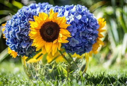 花束,向日葵,绣球花,花瓶