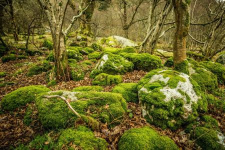 石头,苔藓,树叶,树木,格兰达洛,爱尔兰,上湖,格兰达洛,爱尔兰,树林,绿色,苔藓,景观,岩石