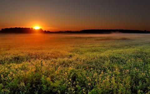 美丽,日落,壁纸