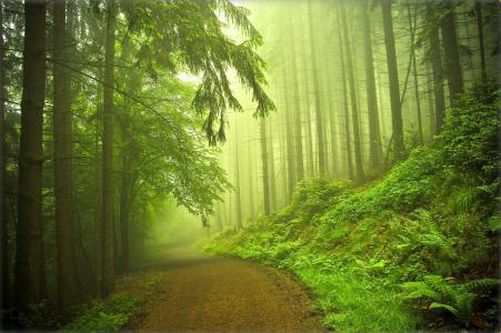 森林,路,树,雾,性质