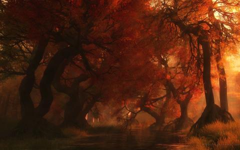 性质,秋季,美女,树木
