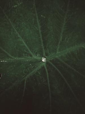 树叶上的一滴露水