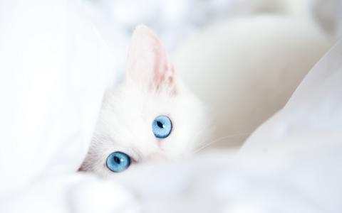 吉蒂,用蓝色,眼睛,壁纸