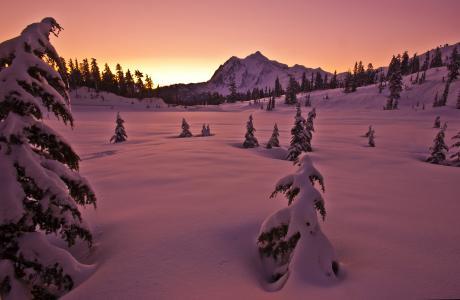 日落,冬天,雪,山,树,景观