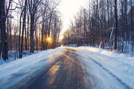 冬季,森林,树木,路,日落,景观