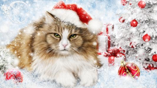 猫,毛茸茸的,树,球,雪