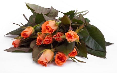 橙色花束,玫瑰