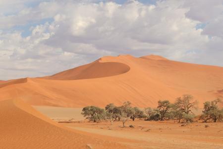 金黄沙漠荒凉意境