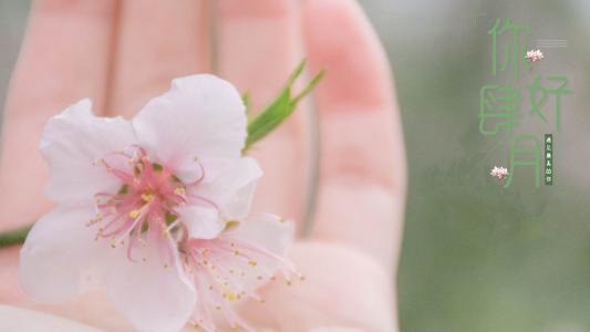 四月你好小清新迷人樱花