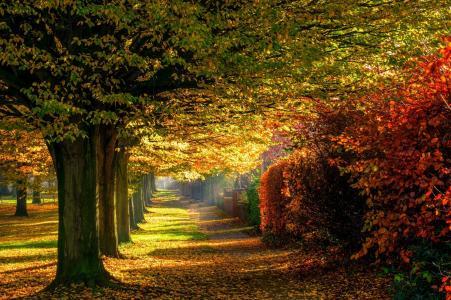 叶子,公园,树,森林,多彩,路径,性质,秋季,道路