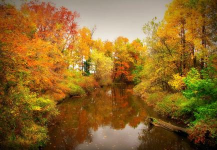 秋天,河,树,景观