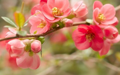 开花,春天