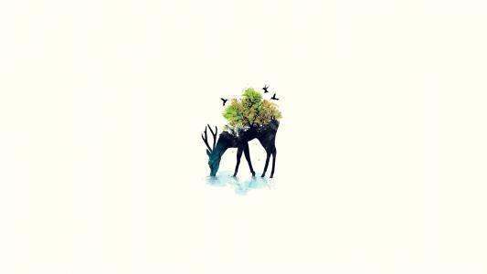 鹿,环境,饮用水,鸟类,植物和花卉,绿色,树木,地球,剪影,鹿,环境,鸟类,植物和花卉,绿色,树木,地球,剪影